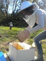 a Bee I dobecome
